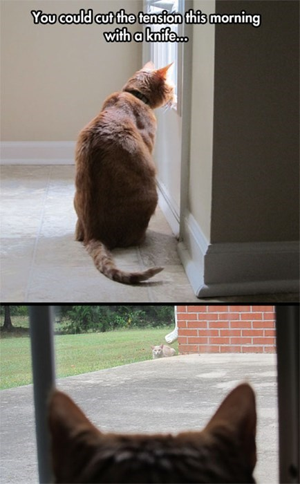 This Will Not Happy Ending, funny cat meme