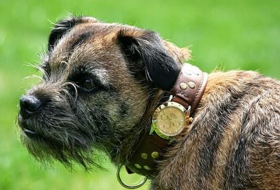 Coolest and Awesome Dog Collars (15) 5