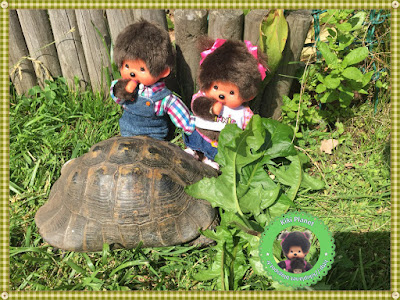 tortue diana bubbles titine ernestine pissenlits fleurs nourrir tortoise grosse gourmande.