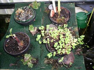 resultado cultivo acuaponico