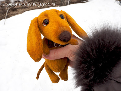 teddy dachshund