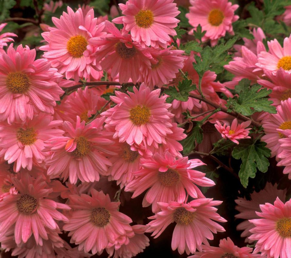 Flowers for flower lovers beautiful flowers hd wallpapers - Beautiful flower images wallpapers ...