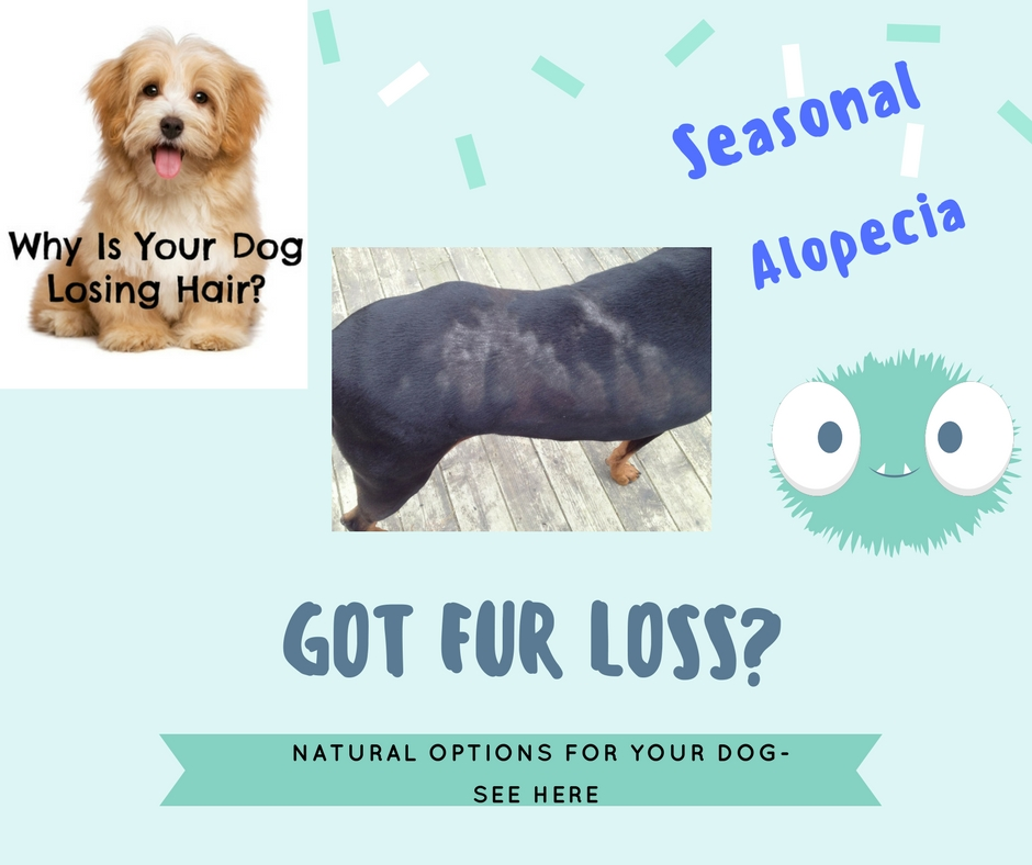 Natural Supplements For Hair Loss In Dogs