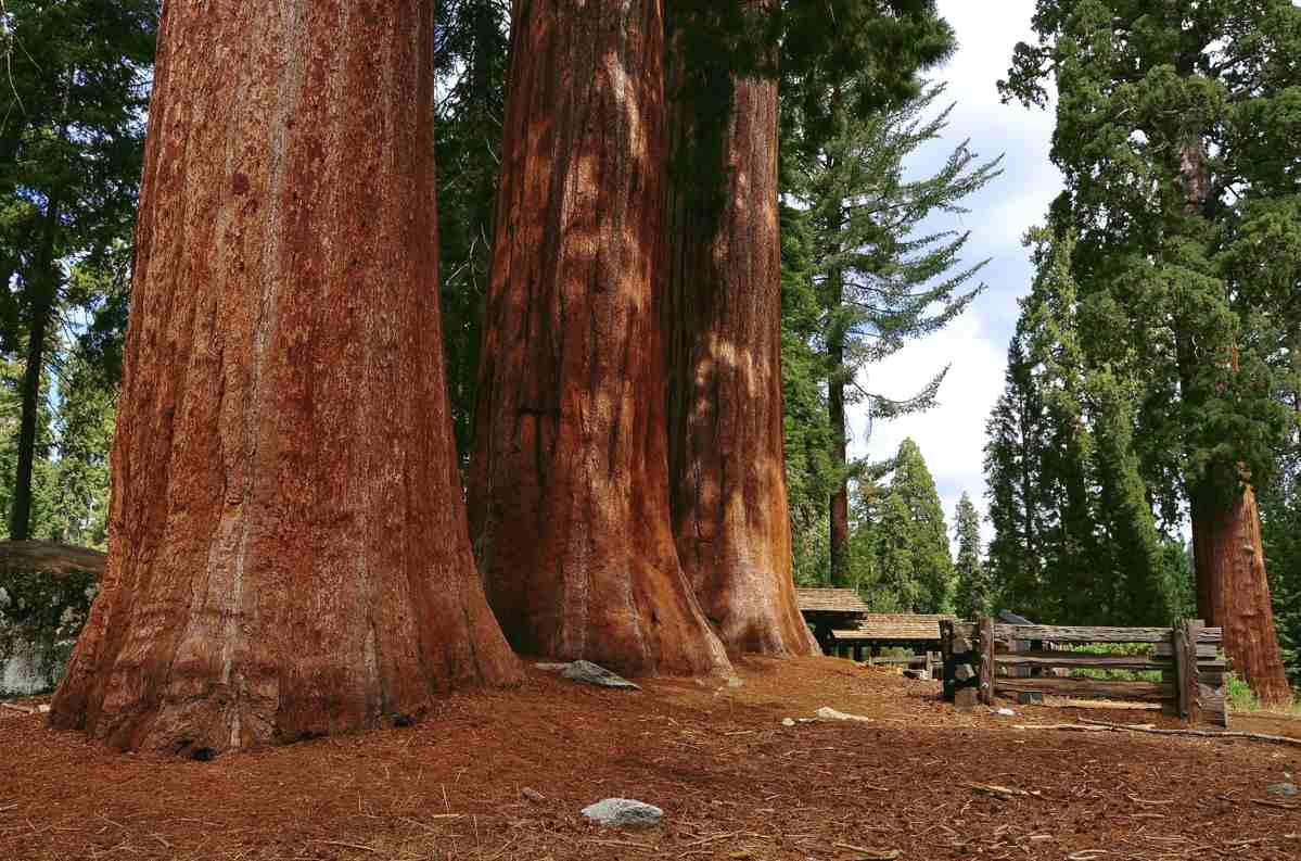 f4cb781f85b8 Навч нь 12-25 мм урт, залуу модных нь гонзгойвтор ба хавтгай, хөгшин модны  дээд талд бол 5-10 мм урт ...