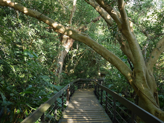 tree covered path at Zhishan Park in Taipei