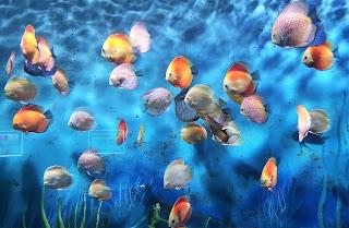 Vinpearl Waterpark Phu Qhoc Vietnam