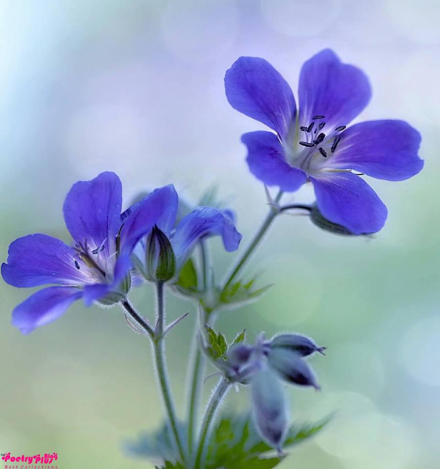 Beautiful flowers pics izmirmasajfo