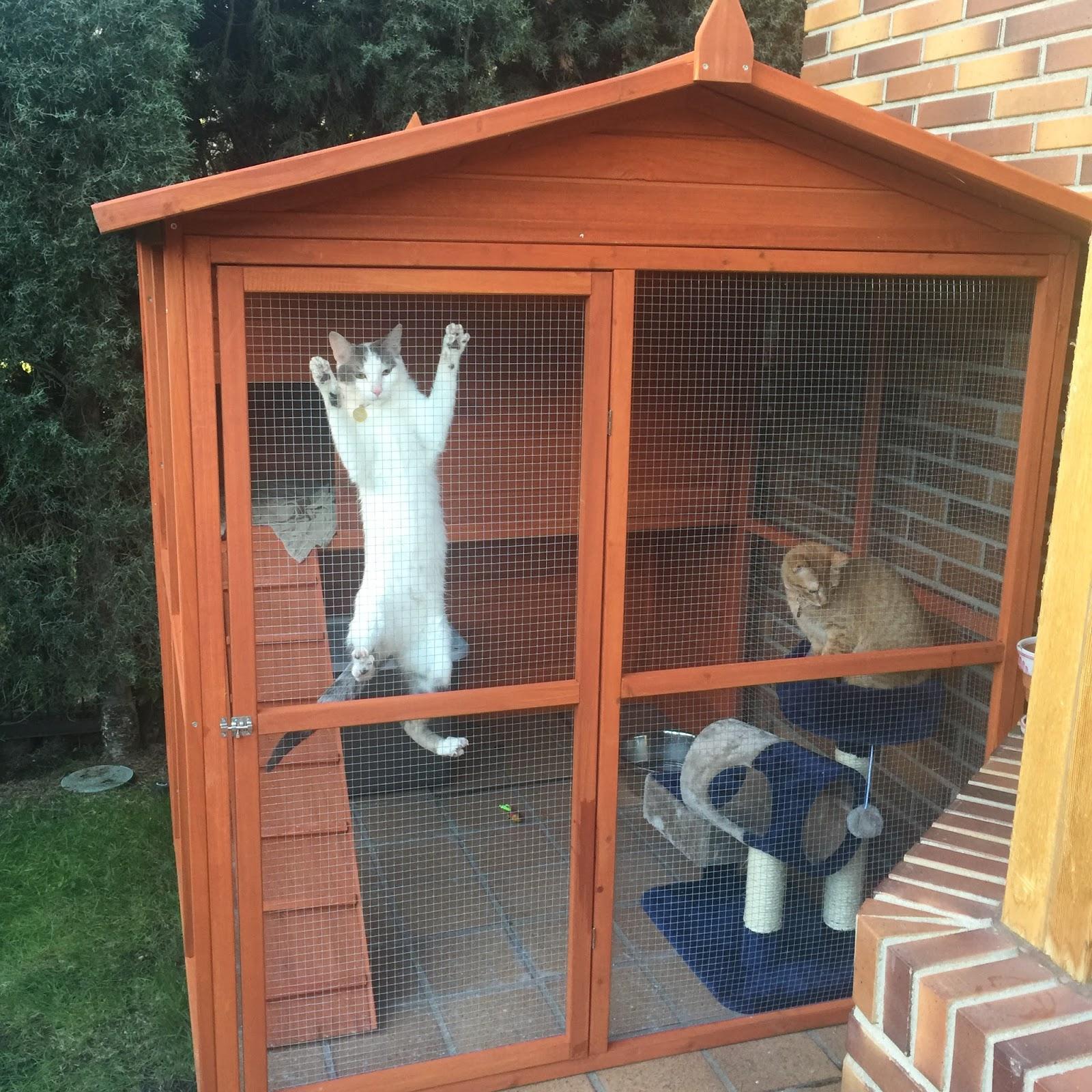 Las cosas de alma el catio qu es y por qu lo he for Ahuyentar gatos de mi jardin
