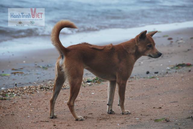 Phút chia tay bịn rịn, lại xuất hiện hình ảnh một Chú chó Phú Quốc trên Đảo Thỏ