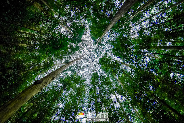 Tree Canopies Crown Shyness in FRIM Kepong KL