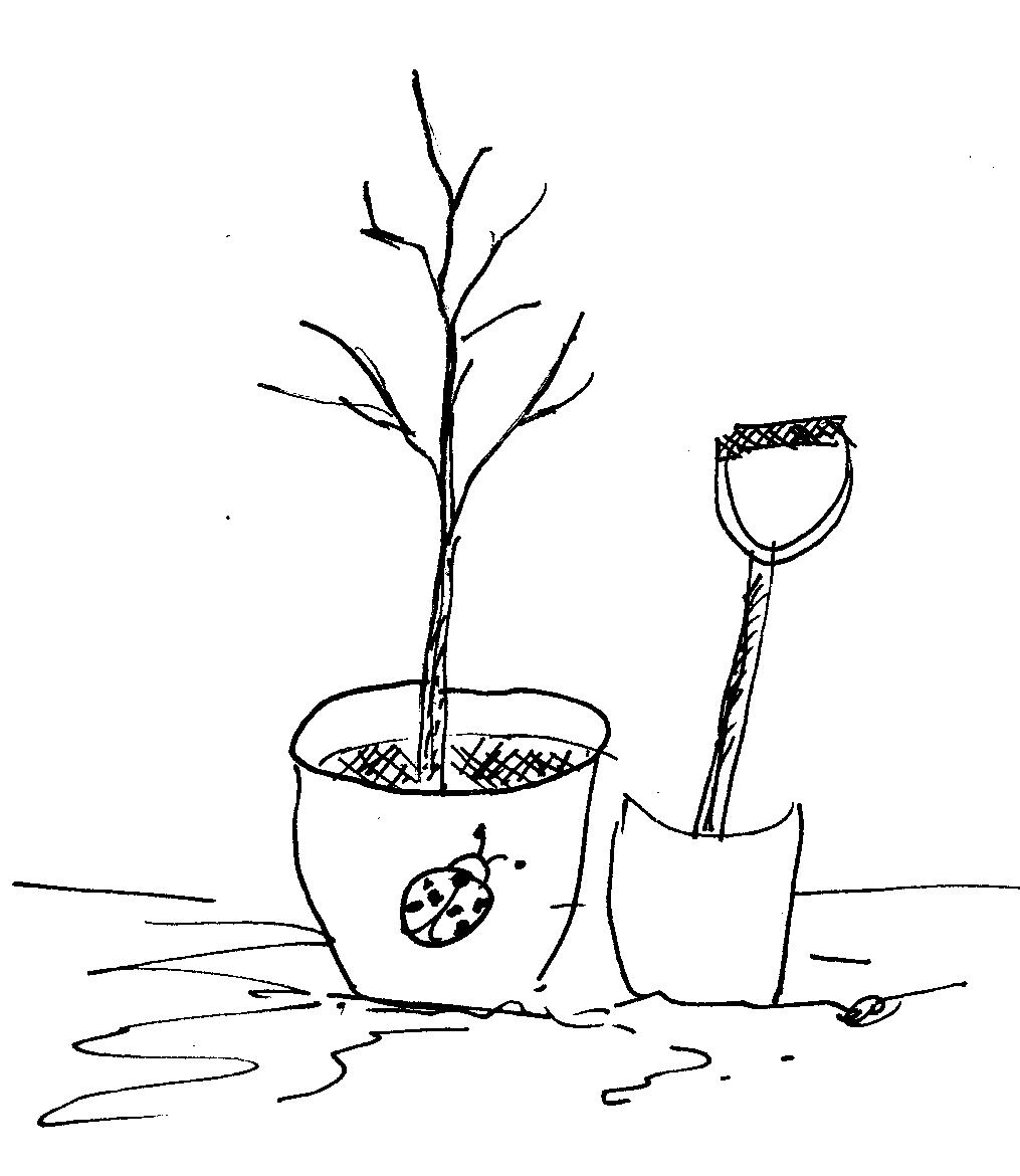 Planting sketch - SOL - Planting a cryptoseed in Puerto Rico