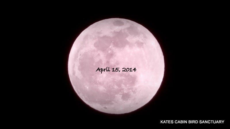 Wow We Have A Sky Hening Tonight First Of All The April Full Moon Is Referred To As Pink In Farmer S Almanac You Will See Below