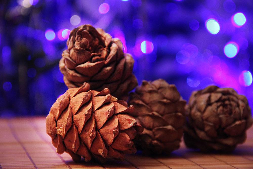 Siberian pinecones