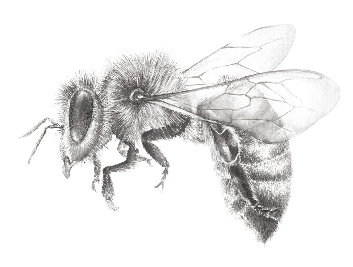 07-Honey-Bee-Jaimee-Paul-Mixed-Media-Animal-Drawings-and-Paintings-www-designstack-co