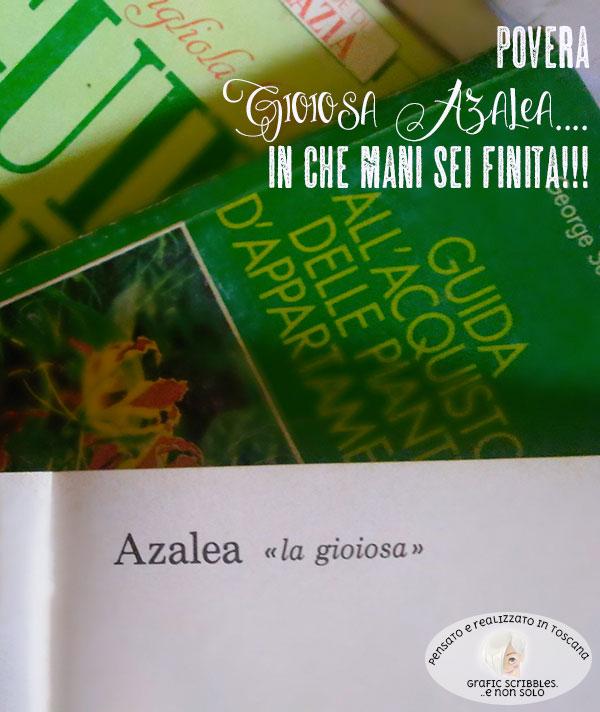 coltivazione dell'Azalea