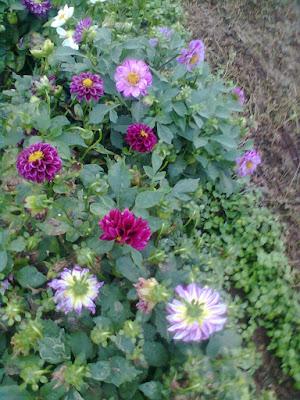 Pookal kavithaigal, flower poems, road side flower poem, saalaiyora pookal kavithaigal, flower poem images, download nice flower poems 2016