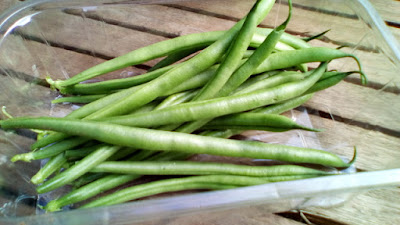 French beans 80 Minute Allotment Green Fingered Blog