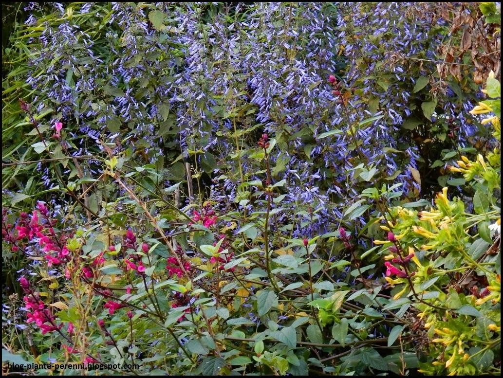 Un giardino di perenni in ticino for Trasforma un semplice terreno in un colorato giardino