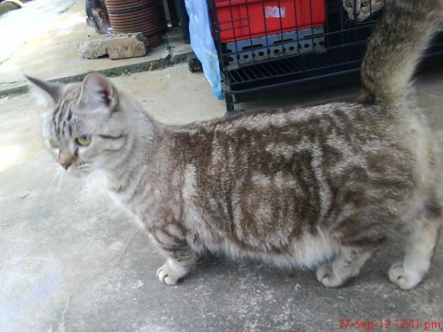 Posted In Kucing Parsi Untuk Dijual