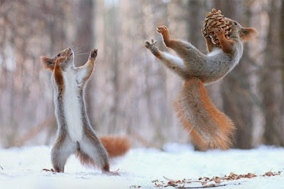 ardillas jugando en la nieve