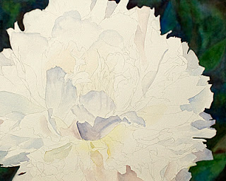 White Peony Watercolor Painting – update 3