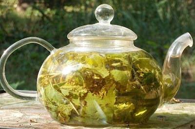 lemon balm sun tea