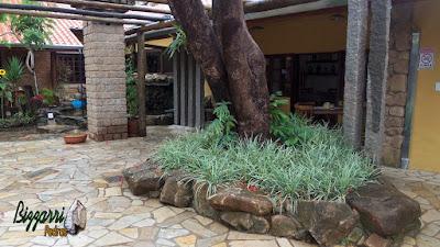 Detalhe do canteiro de pedra no pé da árvore com as mudas de barba de serpente com o piso de pedra de cacos de São Tomé.