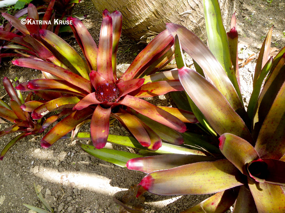 3 Up House Plants That Flower And Leaves No Shoot on