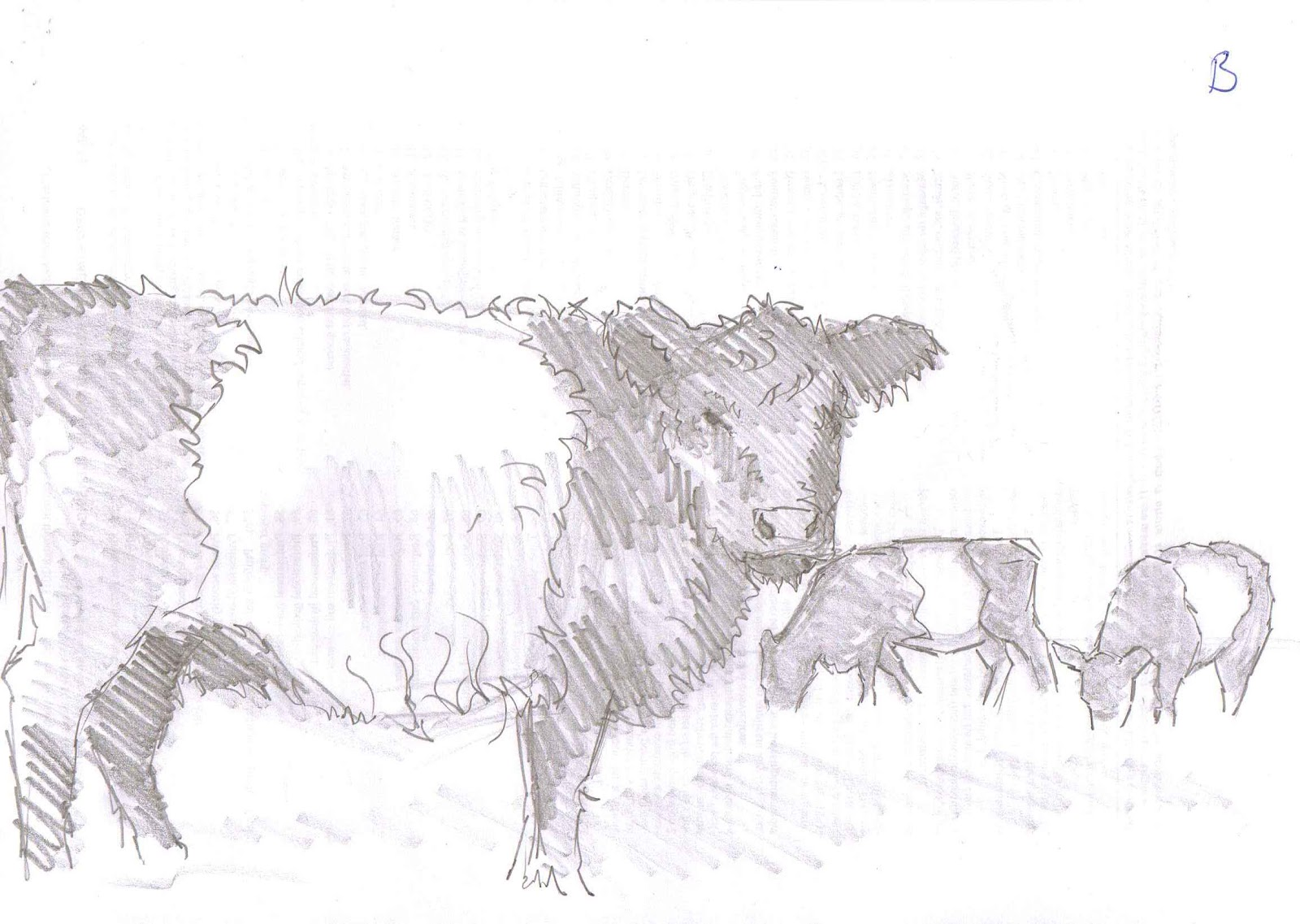 Belted Galloway Cow Thumbnail Pencil Sketches