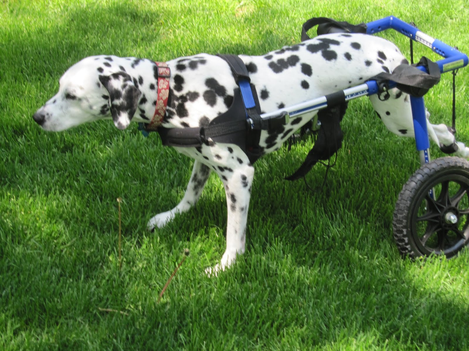 Wheelchair Dog Small Office Chairs Without Arms Reviews