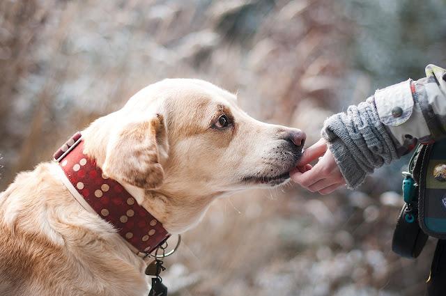Air Liurnya Adalah Najis Berat, Lalu Bagaimana Hukum Memelihara Anjing?