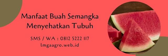 buah semangka,semangka merah,semangka kuning,sehat,manfaat,nutrisi,budidaya semangka,lmga agro
