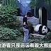 Molesta A Un Panda Para Impresionar A Sus Amigas Y El Final Te Dejará En Shock