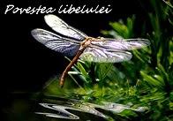 Libelula
