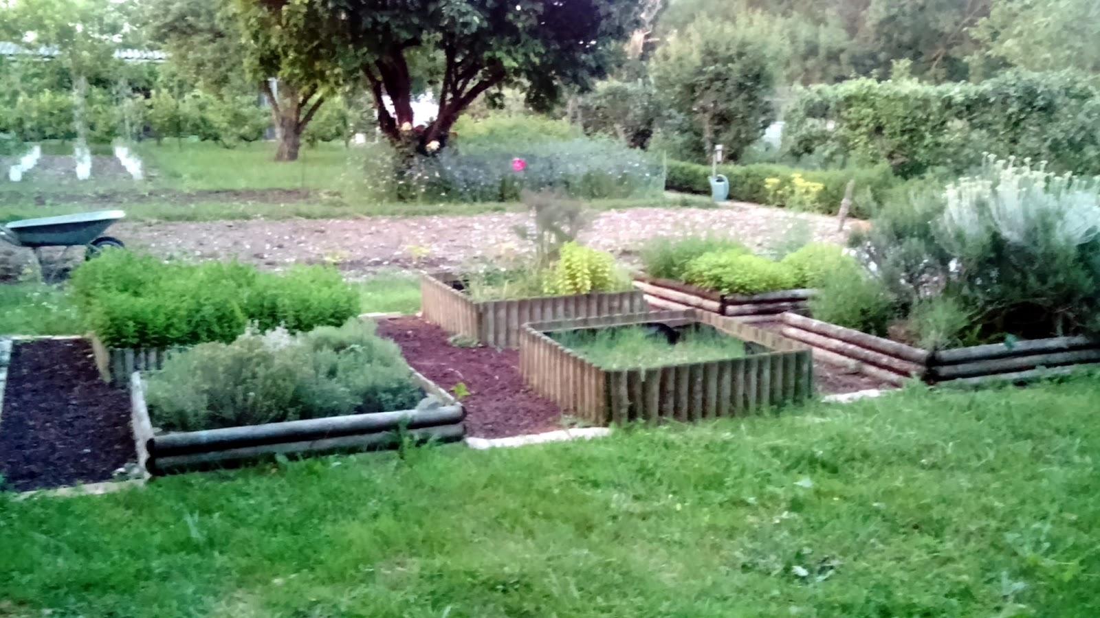 Au jardin d 39 aurore les tomates en cage et autres plantations for Plantation au jardin