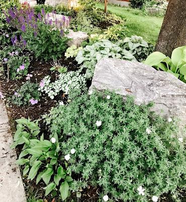 Grow a Perennial Garden
