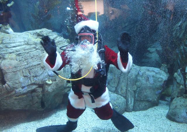 Aquarium of the Pacific Santa Diver