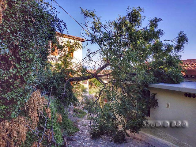 Δέντρο έπεσε πάνω σε σπίτι στο Ναύπλιο