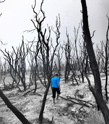 pohon-pohon mati di hutan mati papandayan