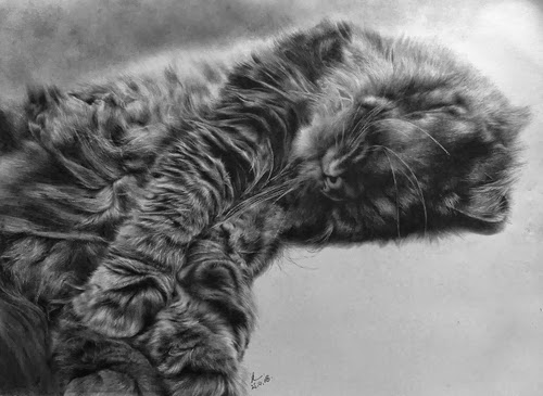 21-Hyper-realistic-Cats-Pencil-Drawings-Hong-Kong-Artist-Paul-Lung-aka-paullung-www-designstack-co