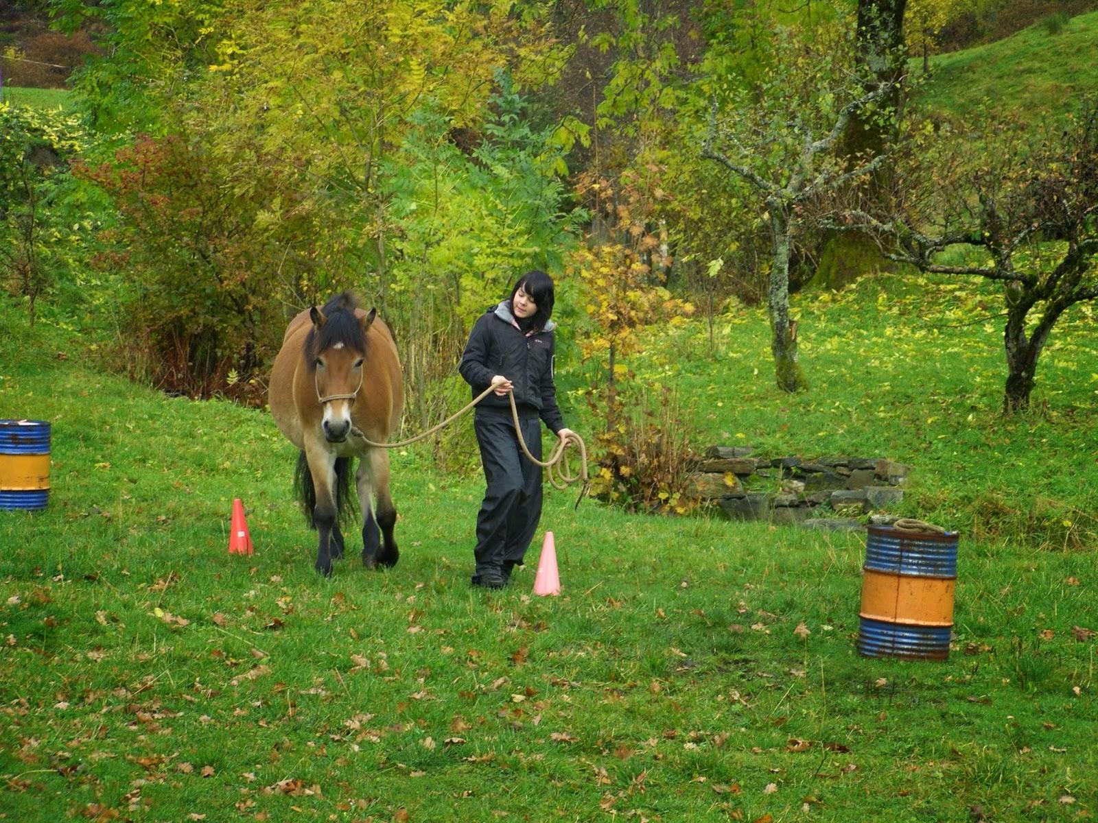 jobb med hest