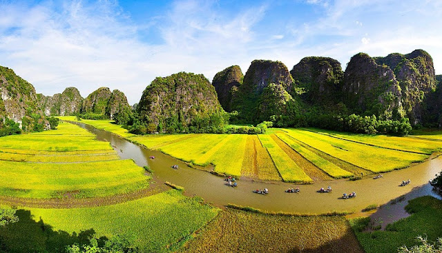 Surprised by the picturesque rice fields look like pictures in Tam Coc 3