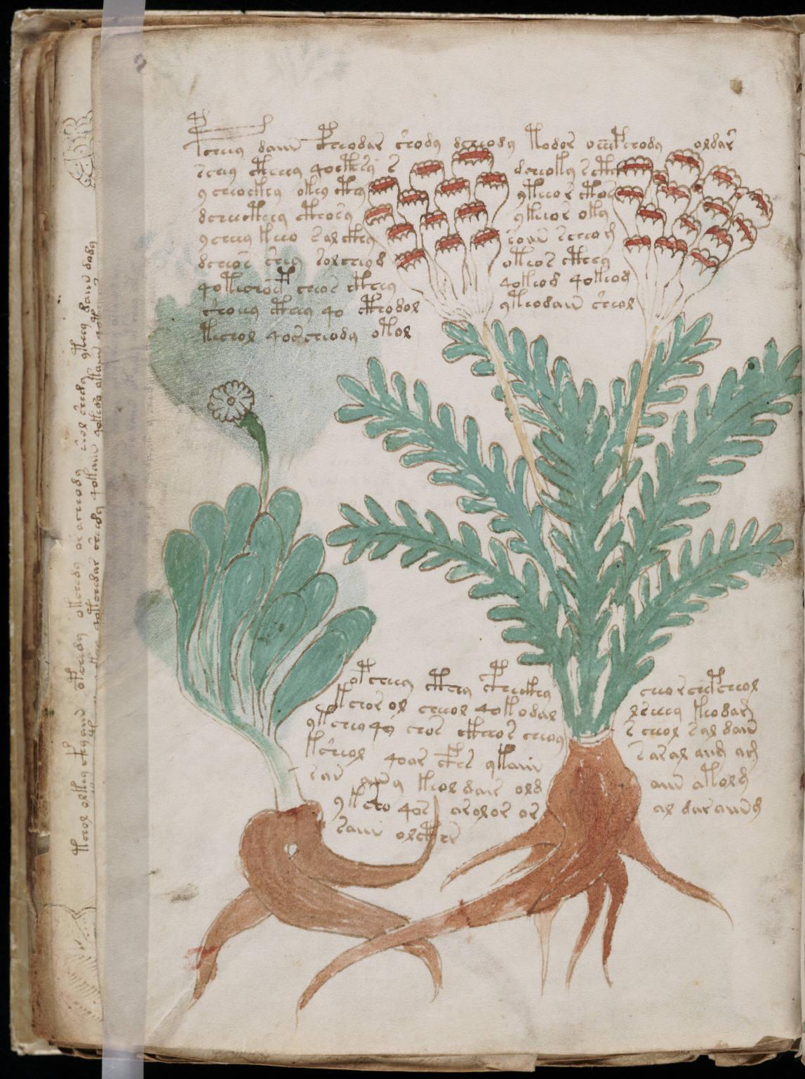 manuscrito158