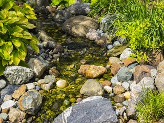 A small stream flowing in the wilderness.