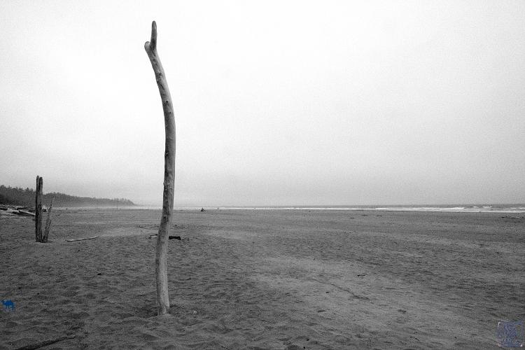 LE Chameau Bleu - Plage  de Tofino sur le Pacific Rim - Long Beach