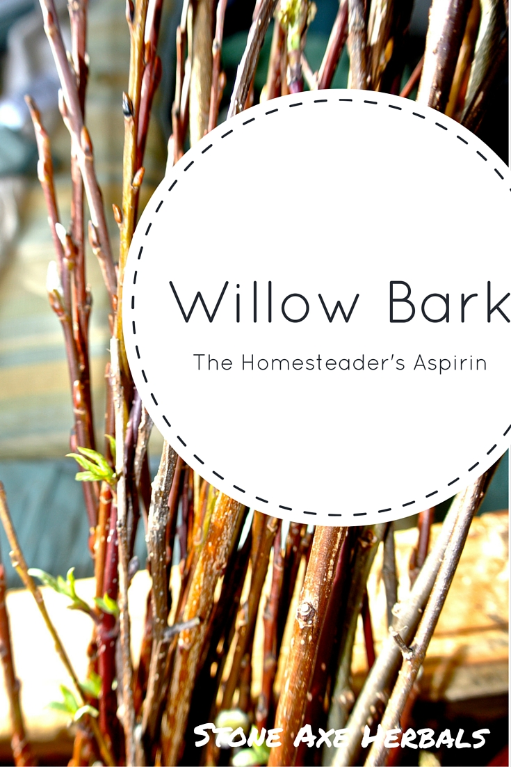 Willow Bark: The Homesteader\'s Aspirin