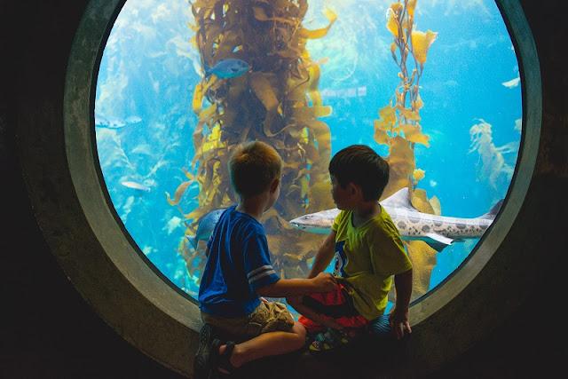 Ir com criança no Monterey Bay Aquarium