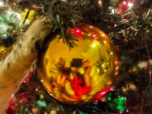 Cat reaching for Christmas bauble