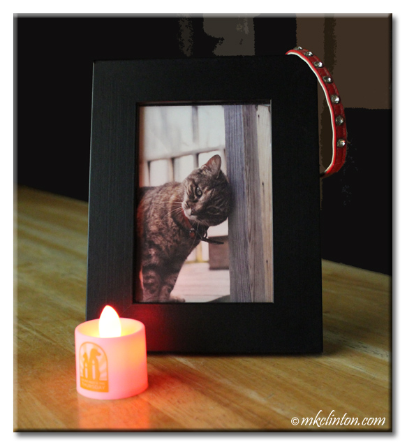 Framed photo of Miss GItty the tabby cat with her collar and candle