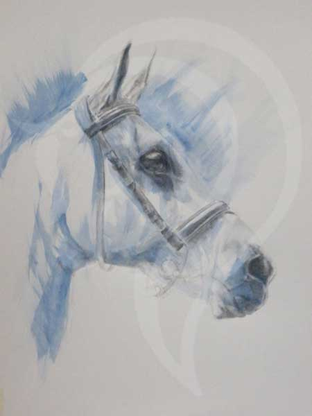 graphite and wash painting of horse, equine art, contemporary equestrian art